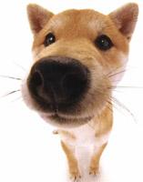 http://laurent2001.free.fr/chien_hfr.jpg